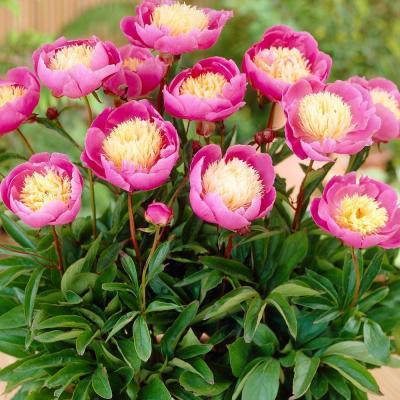 I'm Loving...Martha Stewart gardening plants