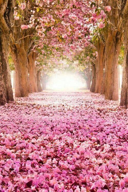 I'm Loving...Flowers