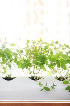I'm Loving...PVC pipe window sill planter