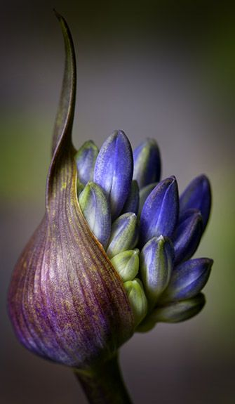 I'm Loving..Flower